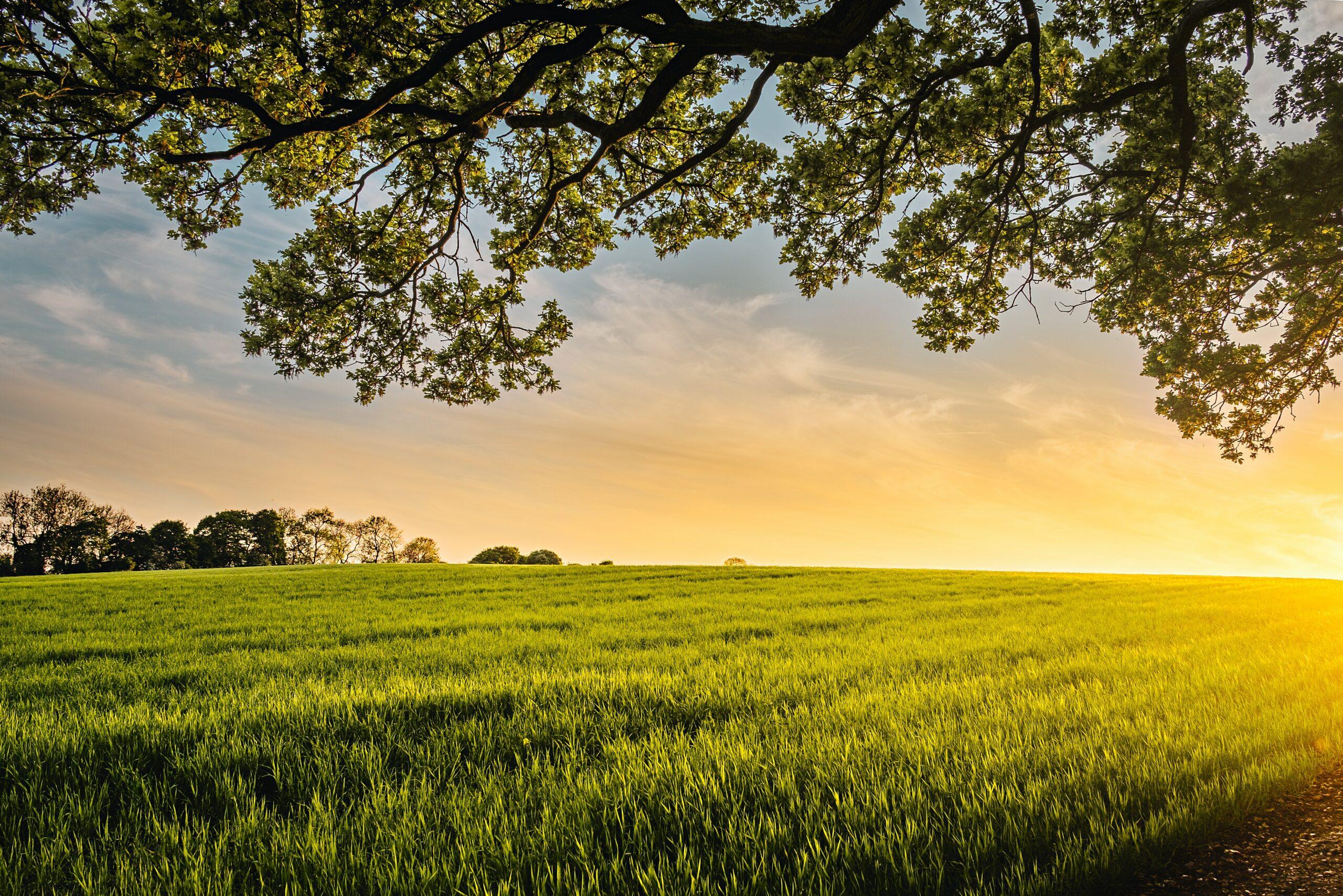 L'OAB a lancé sa plateforme de sciences participatives et propose 5 protocoles d'observation de la biodiversité aux agriculteurs intéressés. Cela leur permet de mieux connaître la biodiversité ordinaire en milieu agricole